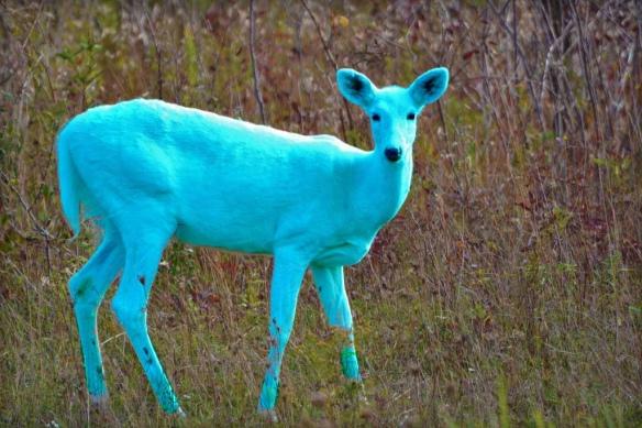 teal deer (tl;dr)